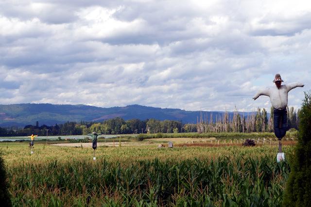 Scarecrows on Sauvie Island, photo by Dena Weigel Bell